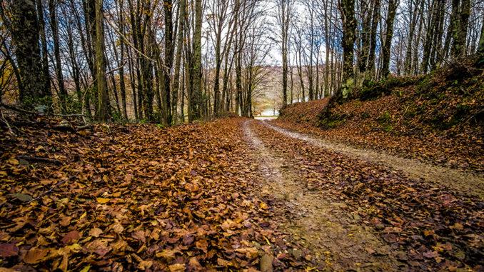 Foliage sui Nebrodi