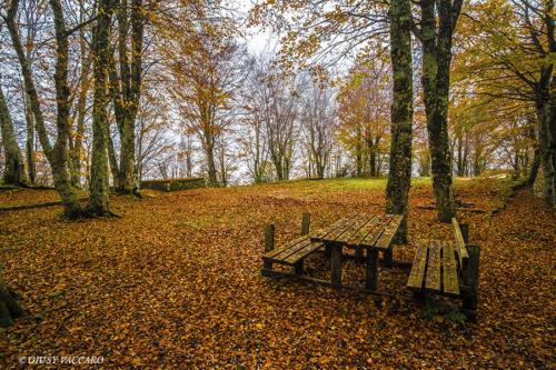 Foliage sul Parco dei Nebrodi